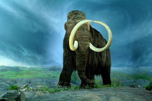 640px-Wooly_Mammoth-RBC.jpg