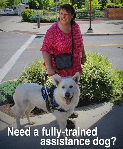 Assistance Dog 3.jpg