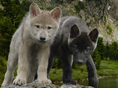 DWP Project - wolf cubs lake.jpg