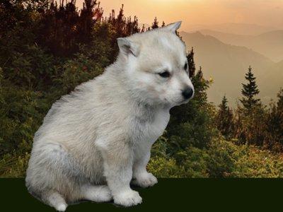 DWP Website - Adopt Puppy banner 2.jpg