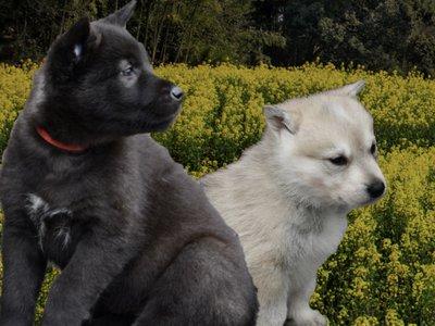 DWP Website - Join the breeder family banner 2.jpg