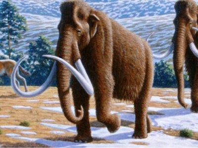 DWP Website - Pleistocene banner 2.jpg