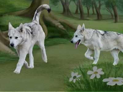 DWP Website - Puppy Training Banner 2.jpg