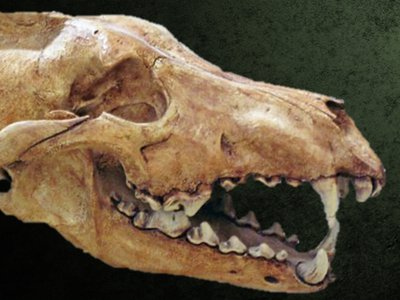 DWP Website - fossil banner 2.jpg