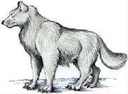 fig_direwolf.jpg