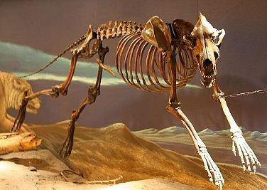 museumskeleton.jpg